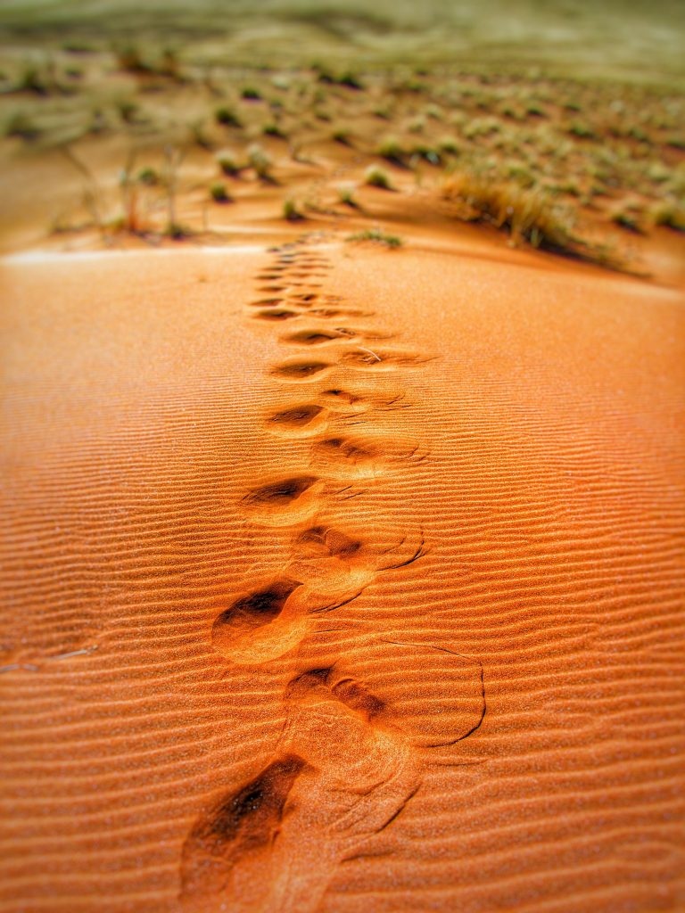 Footprints in the sand in the desert