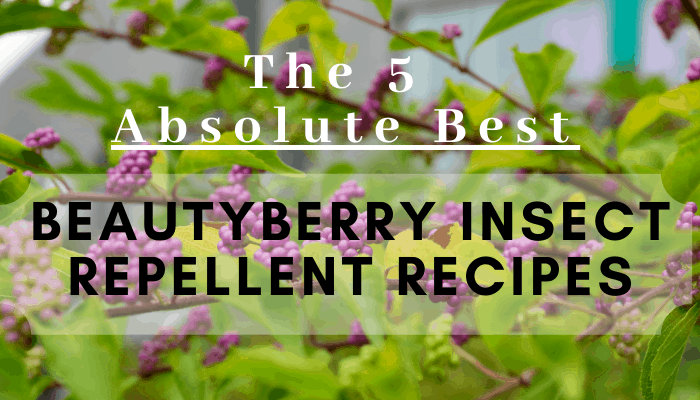 The 5 Absolute Best Beautyberry Insect Repellent Recipes