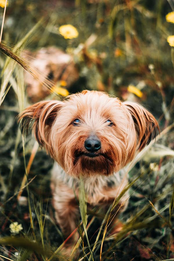 There are three main symptoms to help you identify chigger bites on dogs.