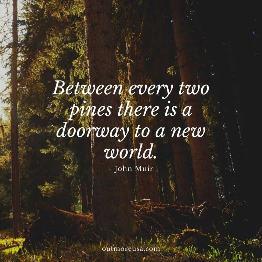 """Between every two pines there is a doorway to a new world."" - John Muir quotes 
