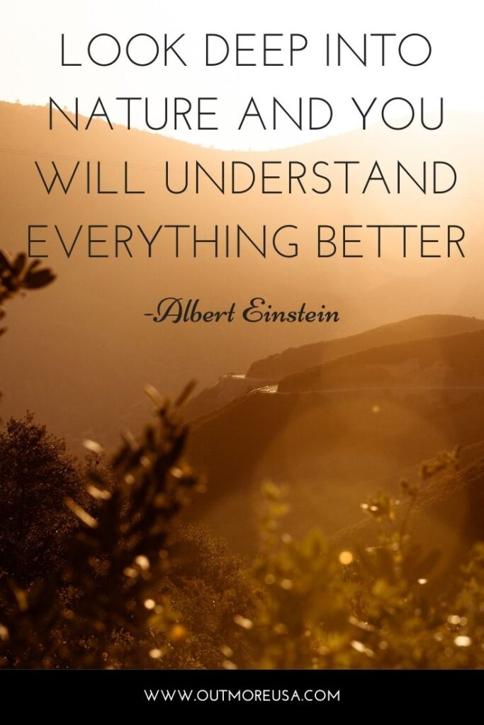 """Look deep into nature and you will understand everything better."" - Albert Einstein quotes 