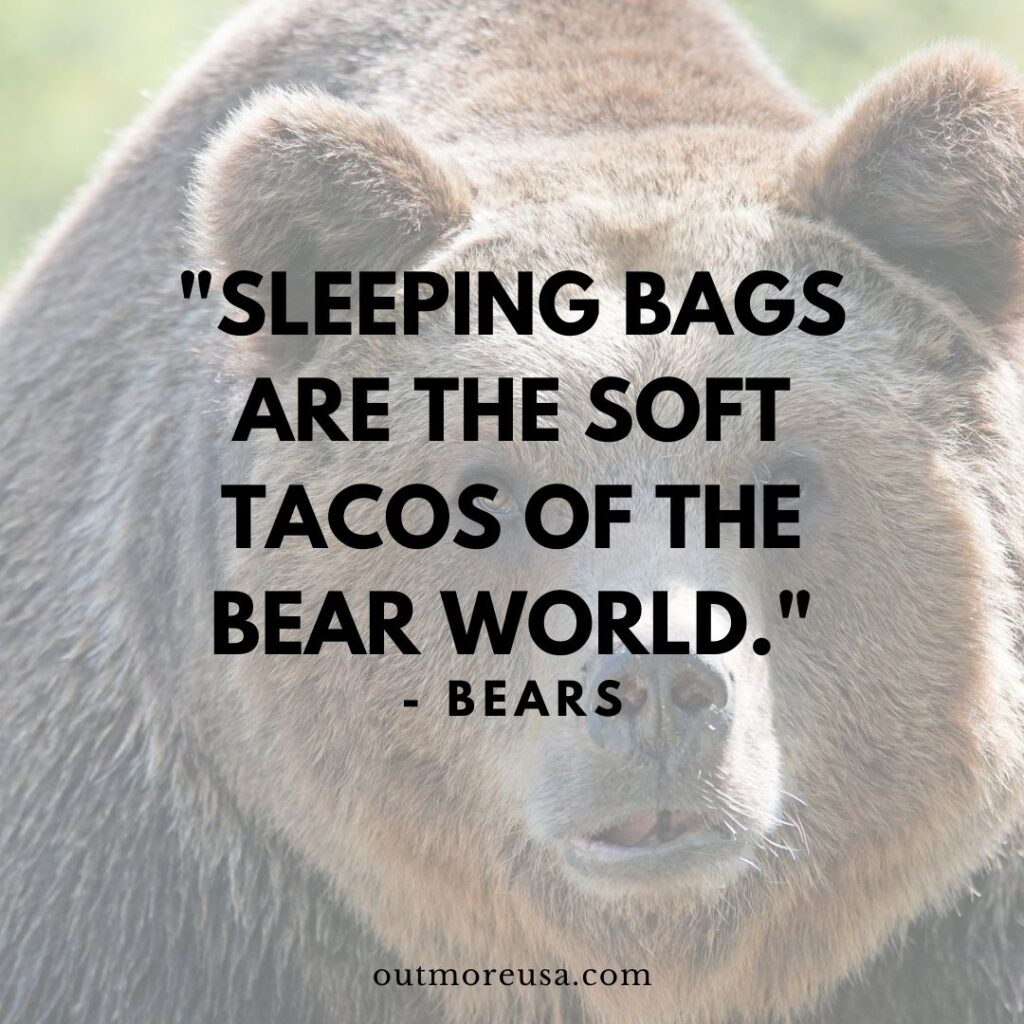 """Sleeping bags are the soft tacos of the bear world."" - Bears quotes 
